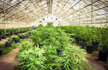 """""""América Latina precisa pensar em legalizar drogas"""", diz agência da ONU"""